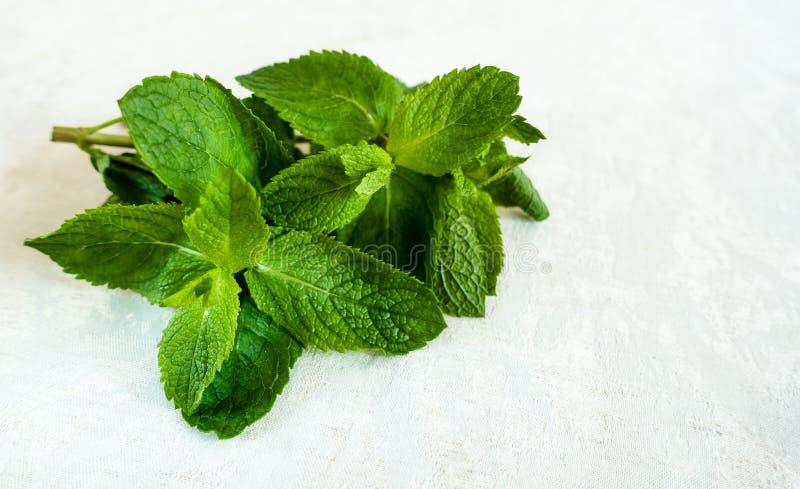 Frische tadellose Blätter auf weißem Hintergrund Gesund und gut für Getränke stockbilder