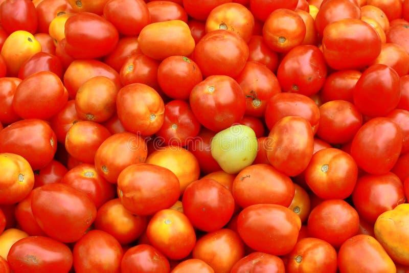 Frische Tomaten lizenzfreies stockbild