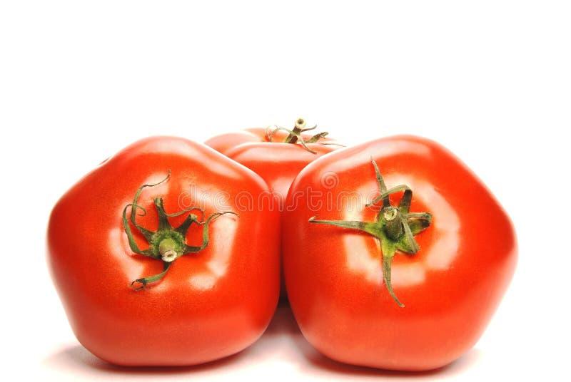 Frische Tomaten der Nahaufnahme lizenzfreie stockbilder