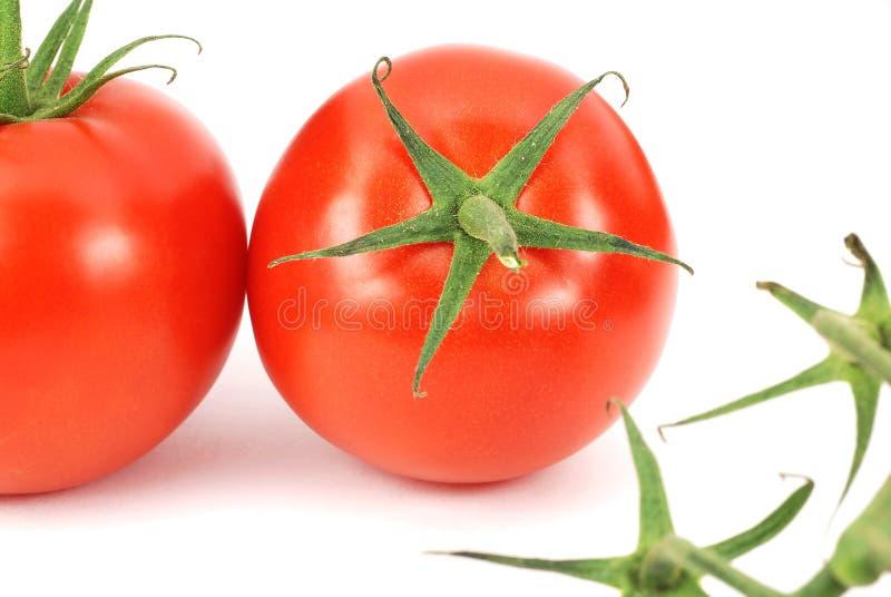 Frische Tomaten der Nahaufnahme lizenzfreie stockfotografie