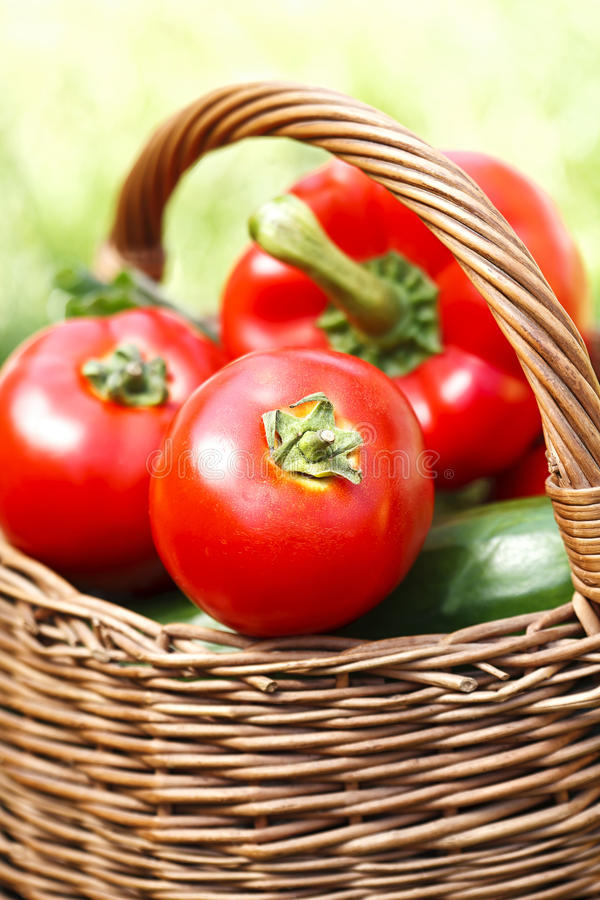 Frische Tomaten in einem Weidenkorb lizenzfreie stockfotografie