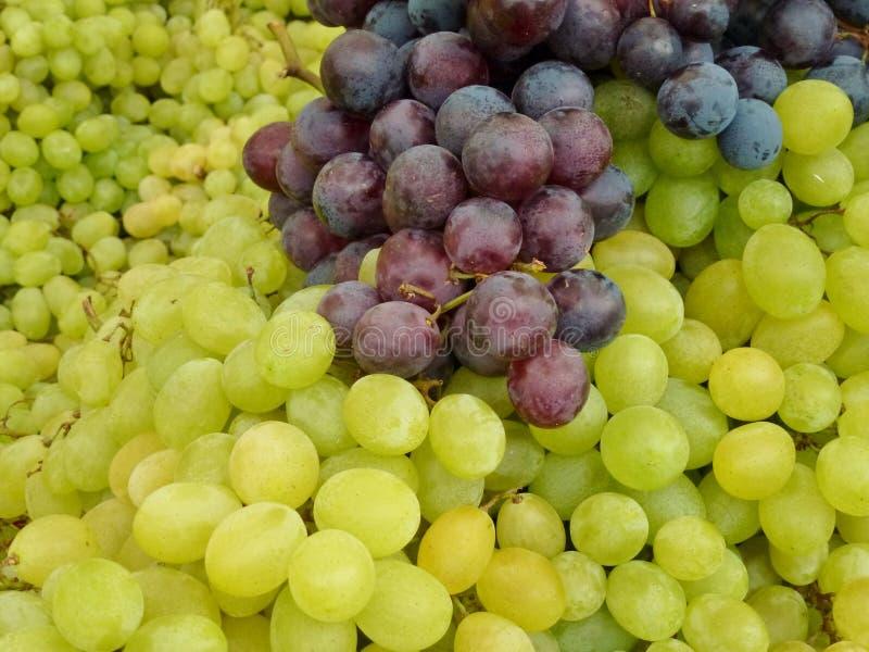 Download Frische Trauben stockfoto. Bild von farben, sappy, gesundheit - 27735480