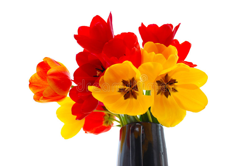 Frische Tulpen lizenzfreie stockbilder