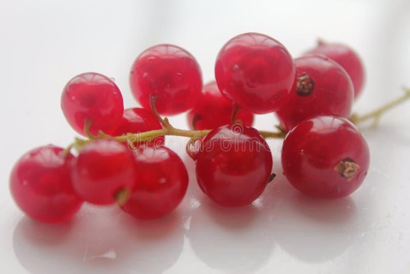 Frische und delicous rote Johannisbeeren stockfotografie