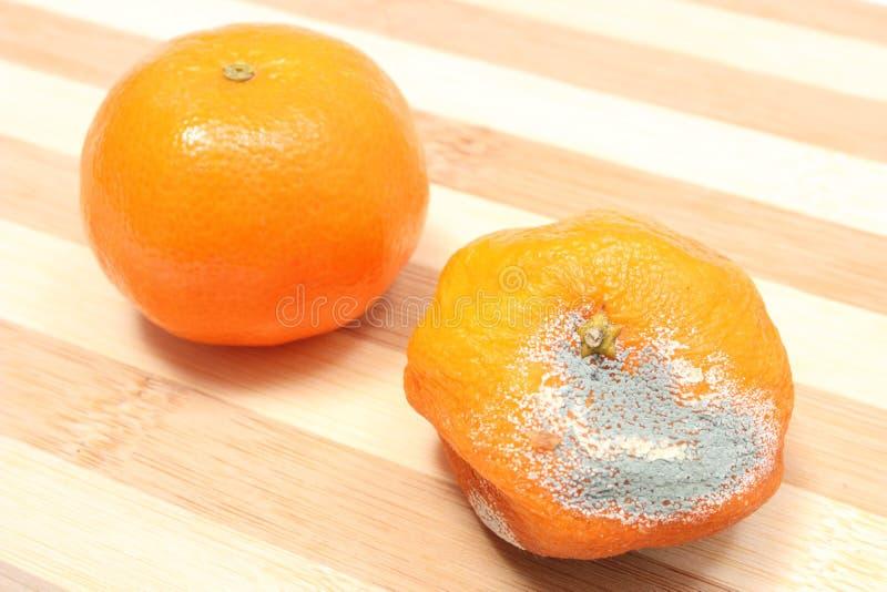 Frische und schimmelige Mandarinen auf weißem Hintergrund lizenzfreie stockbilder