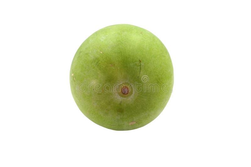 Frische Wachskürbisfrucht lokalisiert auf weißem Hintergrund stockfoto
