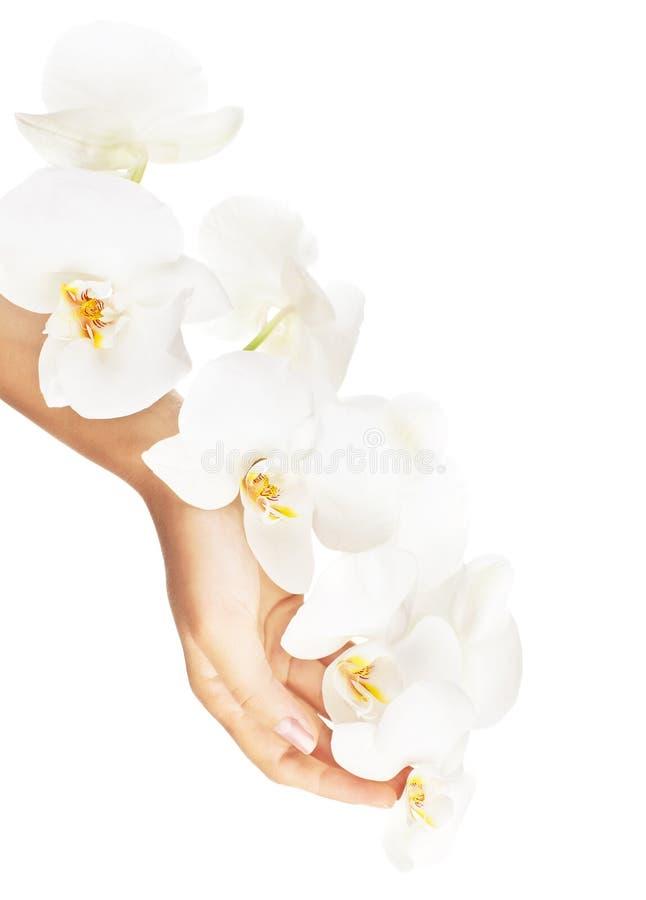 Frische weiße Orchidee in den weiblichen Händen lizenzfreie stockbilder