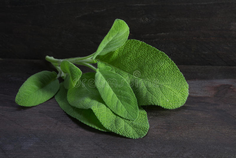 Frische weise Blätter, salvia officinalis, auf rustikalem dunklem Holz, clos stockfoto