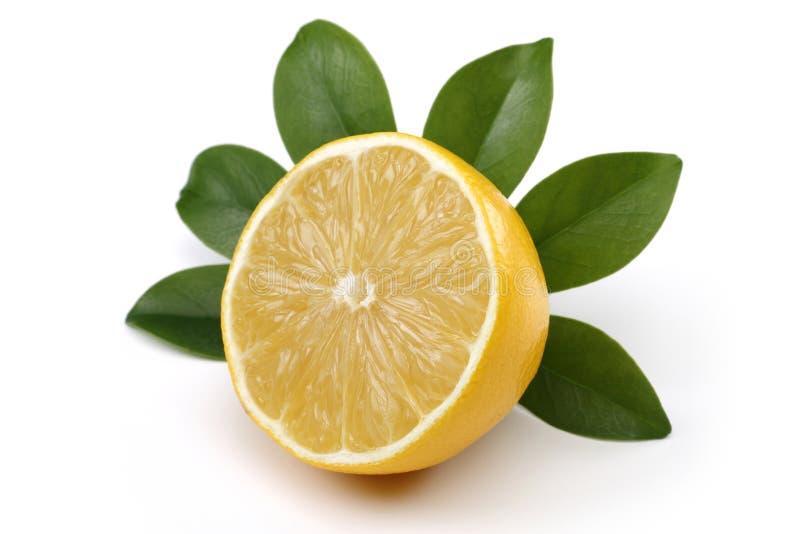 Frische Zitrone lizenzfreies stockbild