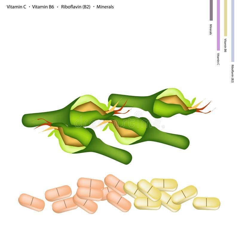 Frische Zucchini-Blüten mit Vitamin C, B6 und B2 lizenzfreie abbildung