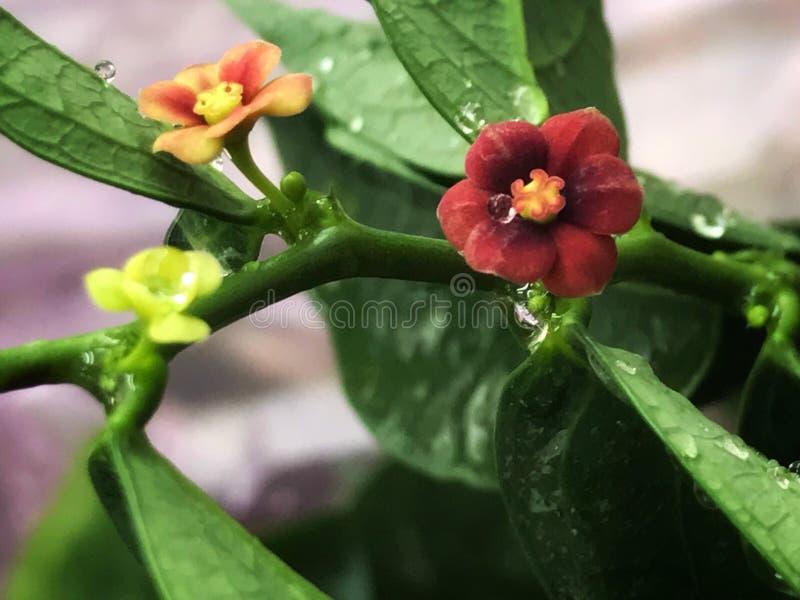 Frischeblumen stockbild
