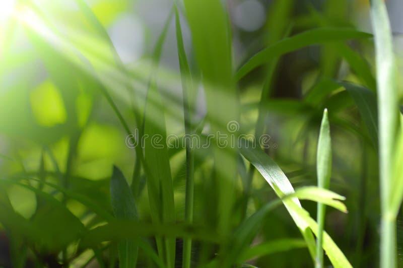 Frischegras in der Natur stockfotografie