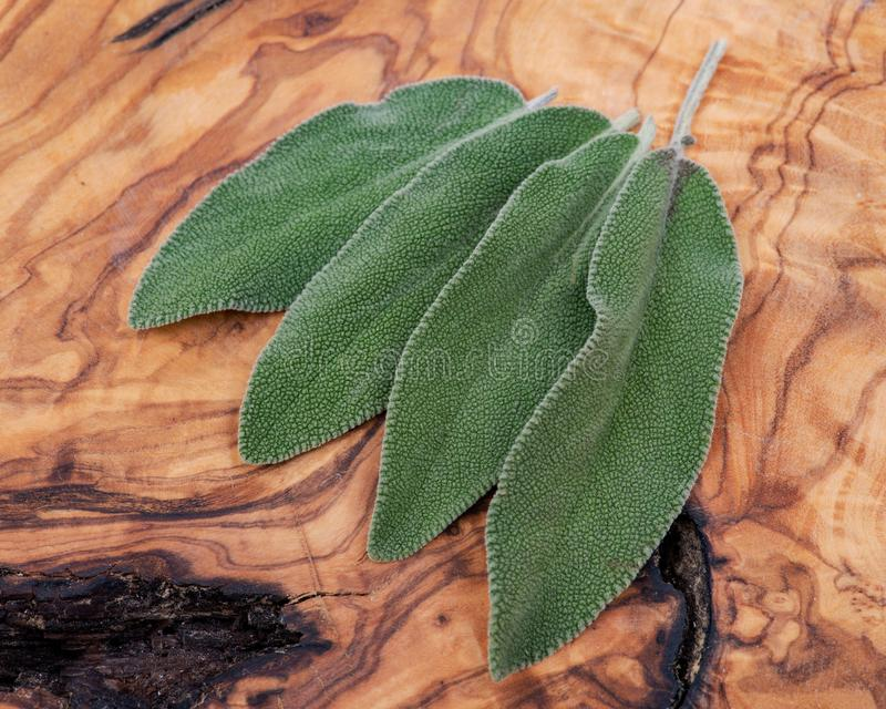 Frischer Biogarten oder allgemeine Sage Salvia-officinalis Bl?tter auf Naturholz Lamiaceaelippenbl?tler stockbilder
