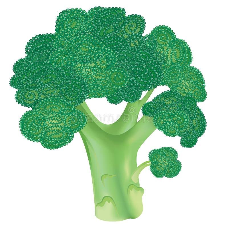 Frischer Brokkoli stock abbildung