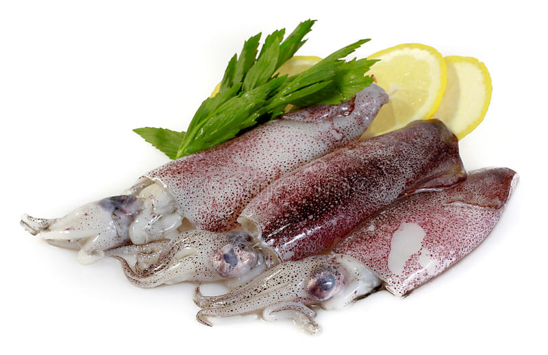 Frischer Calamari mit Zitrone stockfotografie