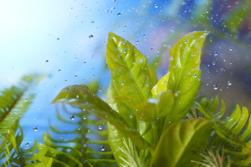 Frischer Frühlings-Regen auf Blättern lizenzfreie stockfotos