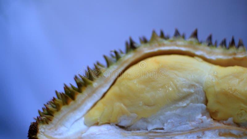 Frischer geschnittener Durian, der K?nig der Frucht von Thailand auf wei?em Hintergrund ist lizenzfreie stockfotografie