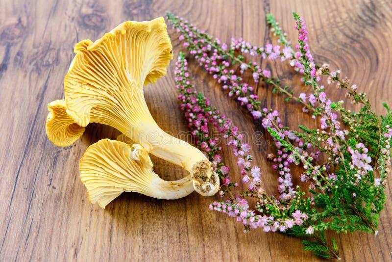 Frischer goldener Pfifferlingspilz auf Holztischhintergrund lizenzfreies stockfoto