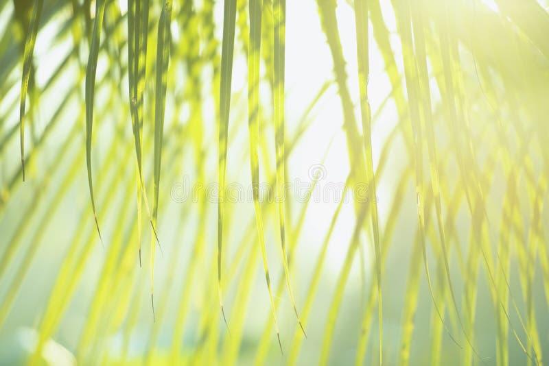 Frischer grüner Baum verlässt mit Rahmen des natürlichen Hintergrundes Grüne Farbe der Zusammenfassungsunschärfe für Naturhinterg lizenzfreies stockfoto