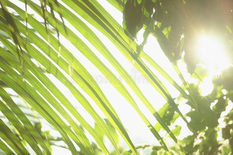 Frischer grüner Baum verlässt mit Rahmen des natürlichen Hintergrundes Grüne Farbe der Zusammenfassungsunschärfe für Naturhinterg lizenzfreies stockbild
