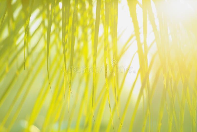 Frischer grüner Baum verlässt mit Rahmen des natürlichen Hintergrundes Grüne Farbe der Zusammenfassungsunschärfe für Naturhinterg lizenzfreie stockbilder