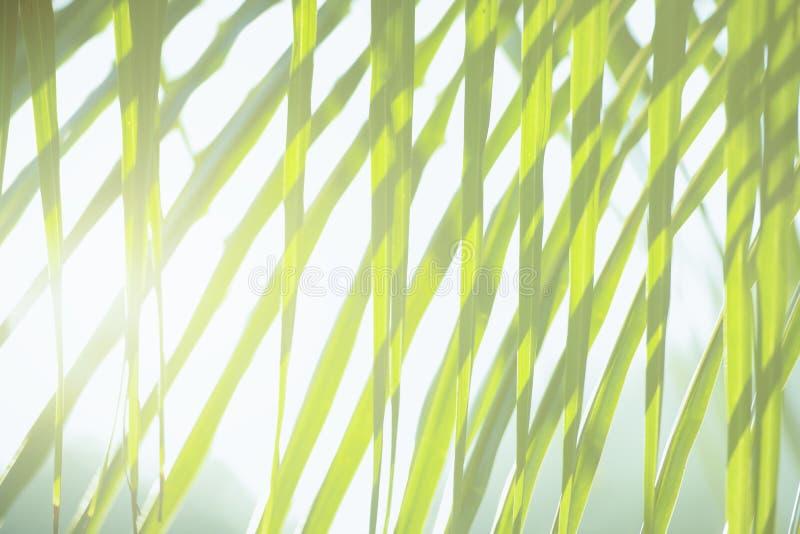 Frischer grüner Baum verlässt mit Rahmen des natürlichen Hintergrundes Grüne Farbe der Zusammenfassungsunschärfe für Naturhinterg stockbilder