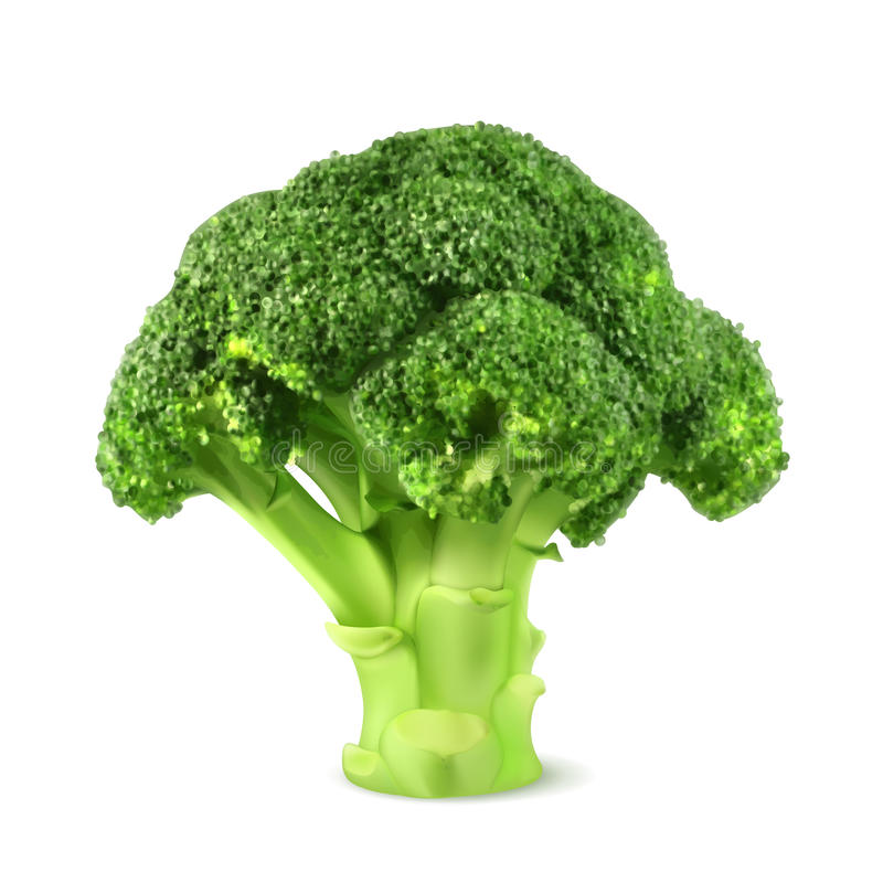 Frischer grüner Brokkoli lizenzfreie abbildung