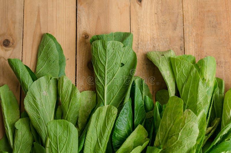 Frischer grüner Chinakohl, Bok Choy, Pok Choi oder PA lizenzfreies stockfoto