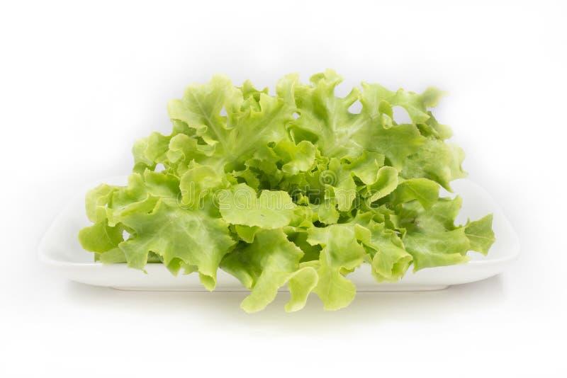 Frischer grüner Eichenkopfsalatsalat auf weißem Hintergrund lizenzfreie stockfotos