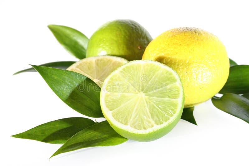 Download Frischer grüner Kalk stockfoto. Bild von gesundheit, immergrün - 9087622