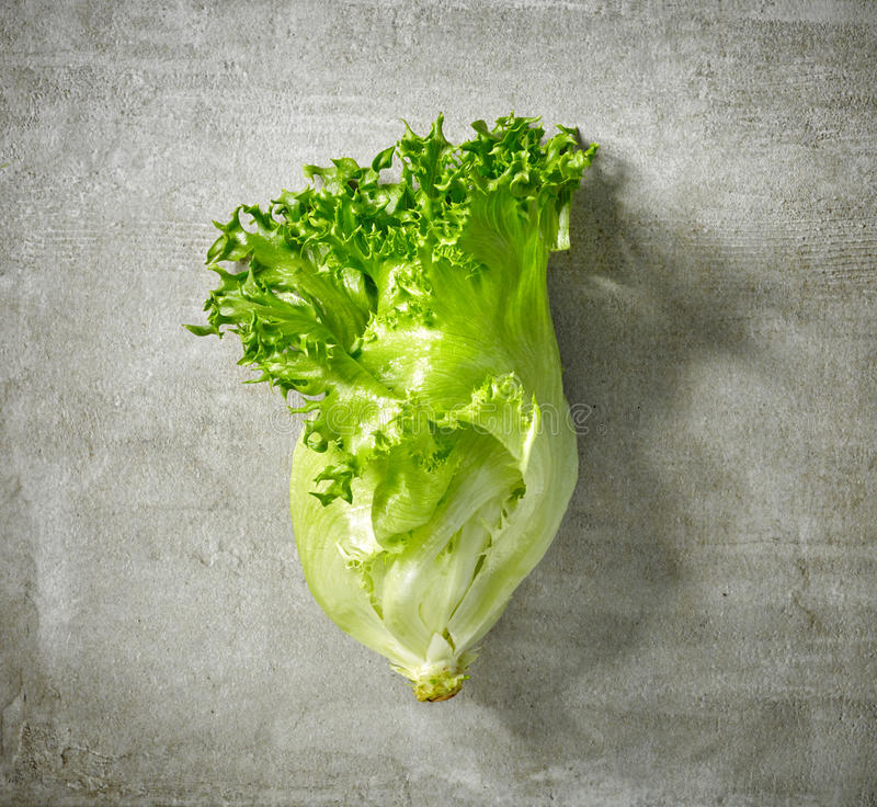Frischer grüner Kopfsalat lizenzfreies stockbild