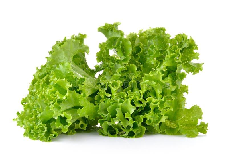 Frischer grüner Kopfsalat lokalisiert auf weißem Hintergrund lizenzfreies stockfoto