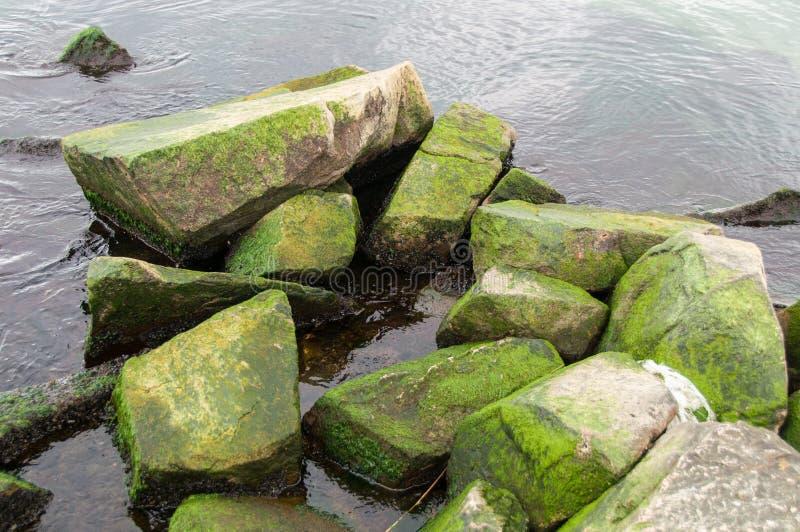 Frischer grüner Ozean lizenzfreies stockfoto
