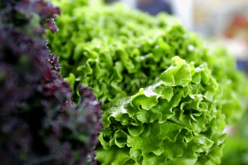 Frischer grüner und roter Kopfsalat lizenzfreie stockfotografie