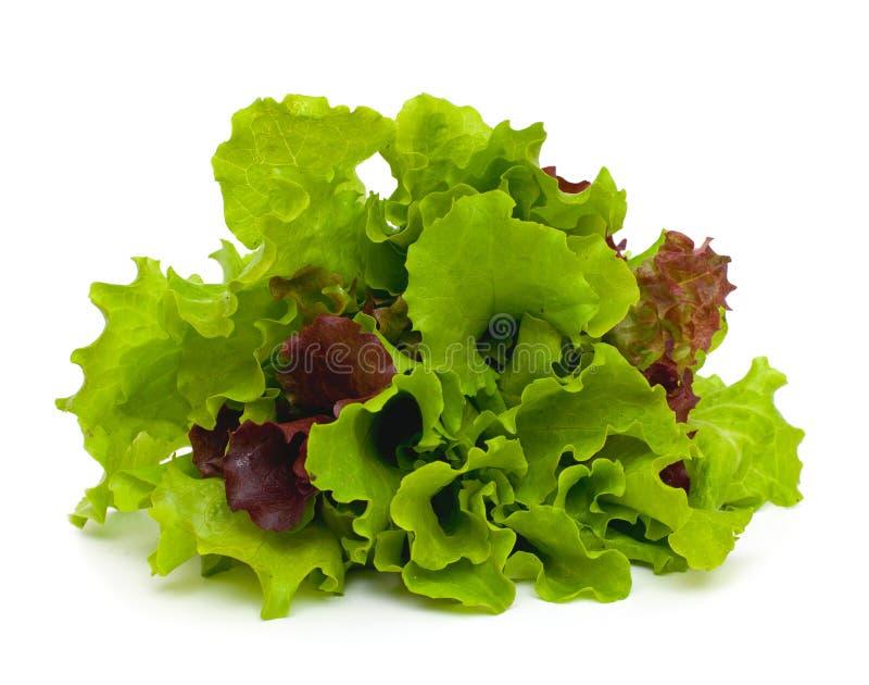 Frischer grüner und roter Kopfsalat auf weißem Hintergrund lizenzfreies stockfoto