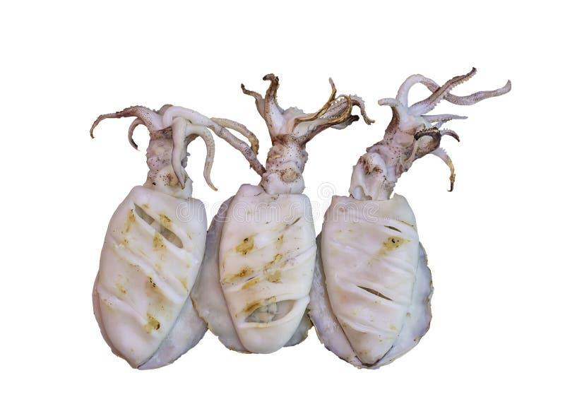 Frischer Kalmar gegrillt auf einem weißen Hintergrund mit Beschneidungspfad stockbilder