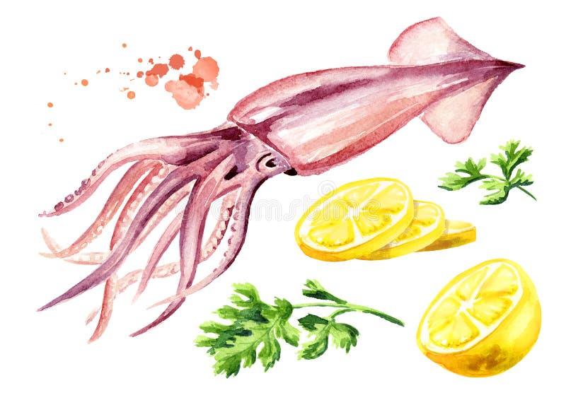Frischer Kalmar mit Zitrone und Kräutern Satz, Meeresfrüchte, Aquarellhandgezogene Illustration lokalisiert auf weißem Hintergrun vektor abbildung