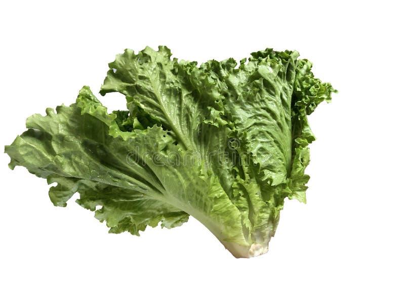 Frischer Kopfsalat auf wei?em Hintergrund stockfoto