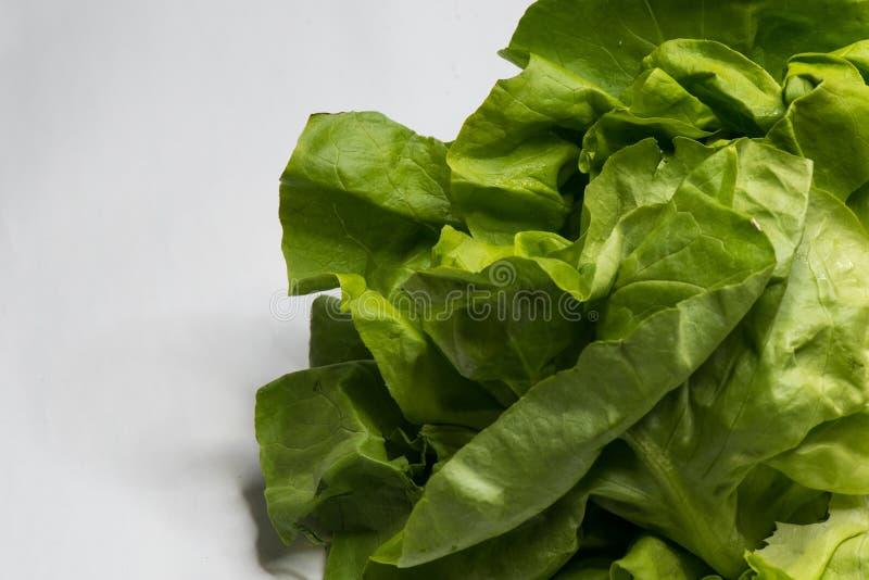 Frischer Kopfsalat des gr?nen Salats lokalisiert auf Wei? lizenzfreies stockbild