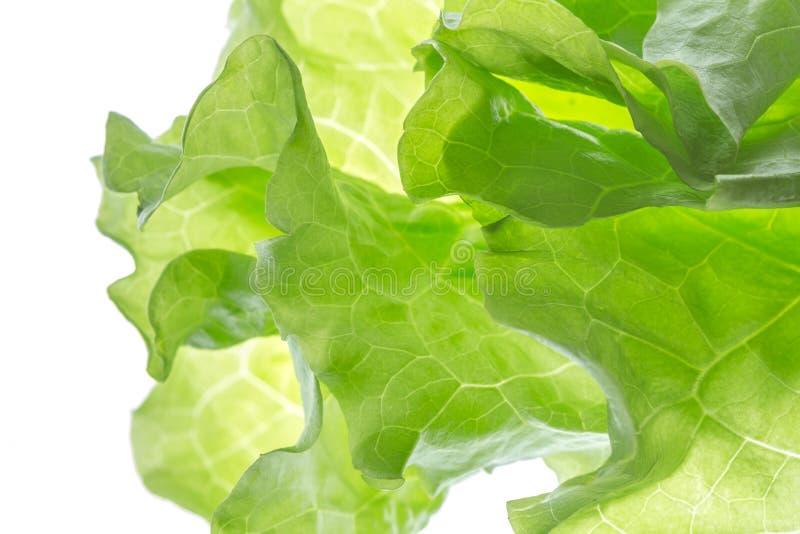 Frischer Kopfsalat ein Blatt lokalisiert auf weißem Hintergrund verlierenSie stockfotografie