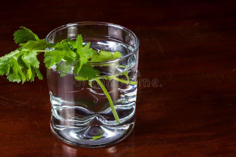 Frischer Koriander in einem Glas Wasser lizenzfreie stockfotografie