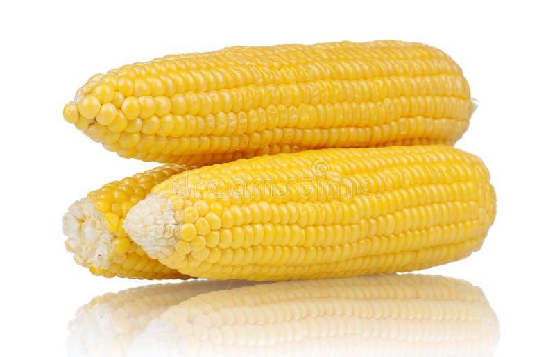 Frischer Mais stockbild