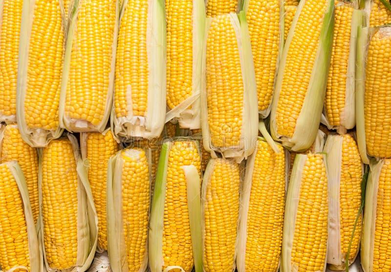 Frischer Mais stockfoto