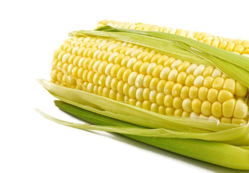 Frischer Mais auf Pfeiler lizenzfreie stockfotos