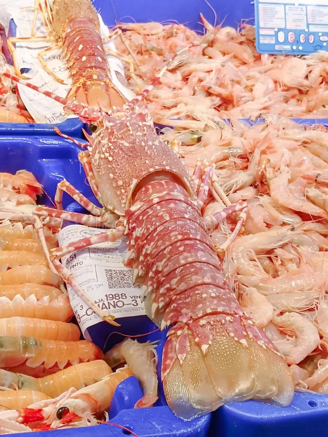 Frischer Meeresfrüchte Kaisergranat am Isla Crsitina-Fischmarkt, Huelva, Spanien stockbilder