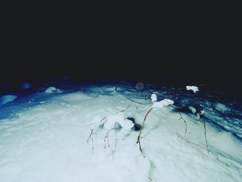 Frischer Pulverschnee glitzert auf Niederlassung im Abendwald stockbild