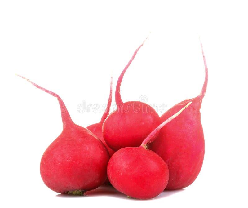 Frischer Rettich auf wei?em lokalisiertem Hintergrund Fr?hling Eine Tomate, eine Gurke, Salat Nahaufnahme lizenzfreies stockfoto