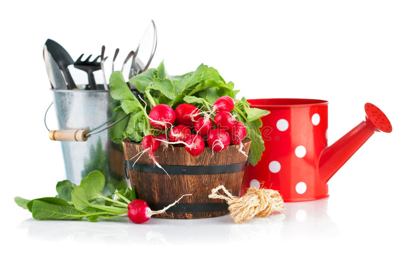 Frischer Rettich mit Gartenwerkzeugen stockbild