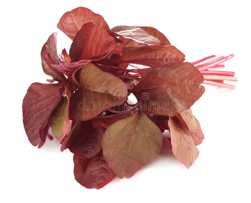 Frischer roter Amarant oder roter Spinat stockbilder