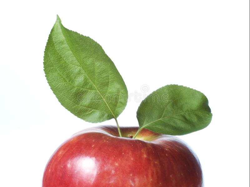 Frischer roter Apfel lizenzfreies stockfoto